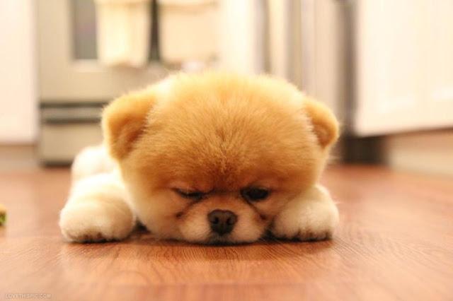 Giải mã ý nghĩa nằm mơ thấy chó là điềm báo trước gì