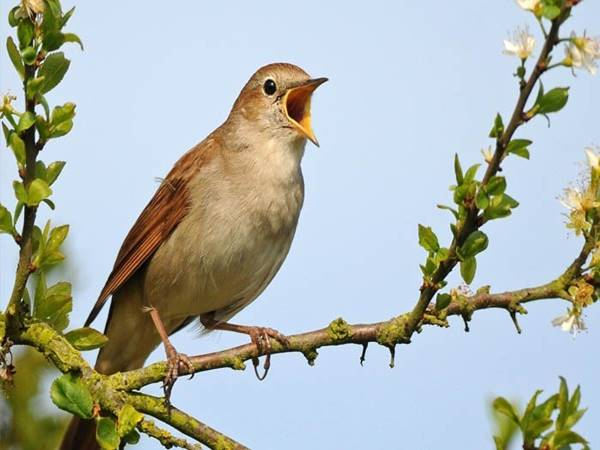 Mơ thấy chim là điềm báo lành hay dữ?