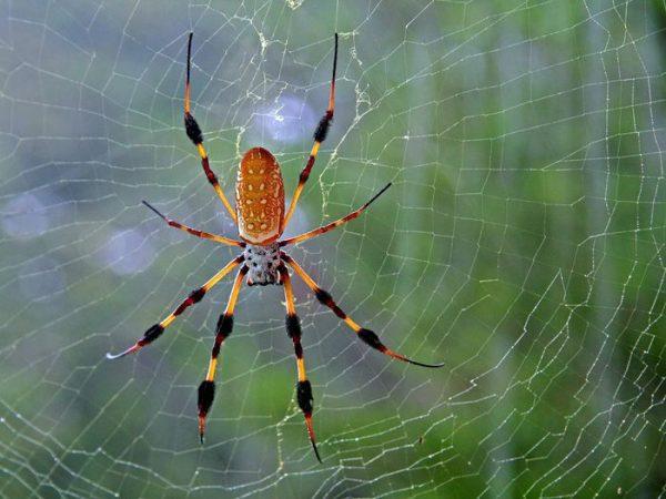 Mơ thấy nhện đánh con gì trúng lớn và đem lại may mắn?