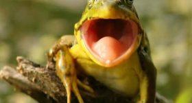 Ngủ mơ thấy ếch – Giải mã bí ẩn giấc mơ thấy ếch