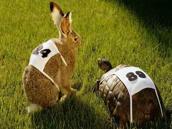 Mơ thấy con thỏ – Ý nghĩa và điềm báo của giấc mơ thấy con thỏ