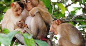 Mơ thấy khỉ – Ý nghĩa điềm báo của giấc mơ thấy khỉ