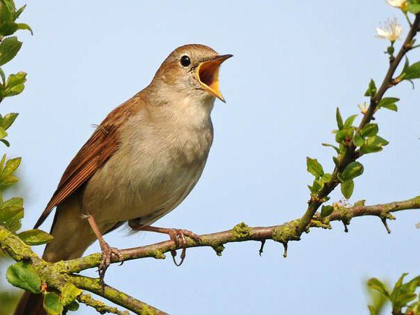 Nằm mơ thấy chim có điềm báo gì đặc biệt