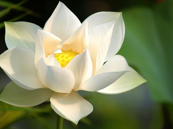 Giải mã giấc mơ thấy hoa màu trắng đánh số nào chính xác?