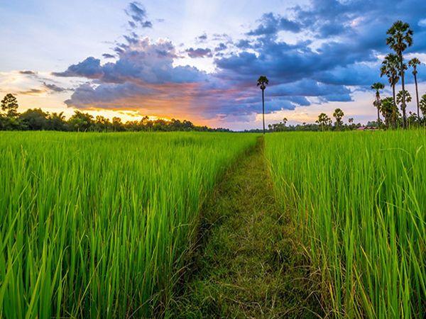 Mơ thấy cánh đồng: Giải mã ý nghĩa giấc mộng về cánh đồng
