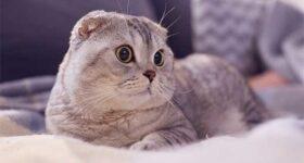 Nằm mơ thấy mèo đánh số mấy? Ý nghĩa giấc mơ là gì?