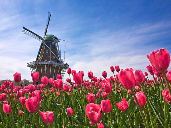 Giải mã giấc mơ thấy hoa tulip là điềm lành hay dữ? Đánh con gì?