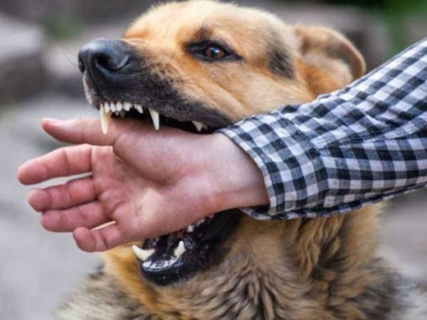 Nằm mơ thấy chó cắn đánh xổ số con gì dễ trúng