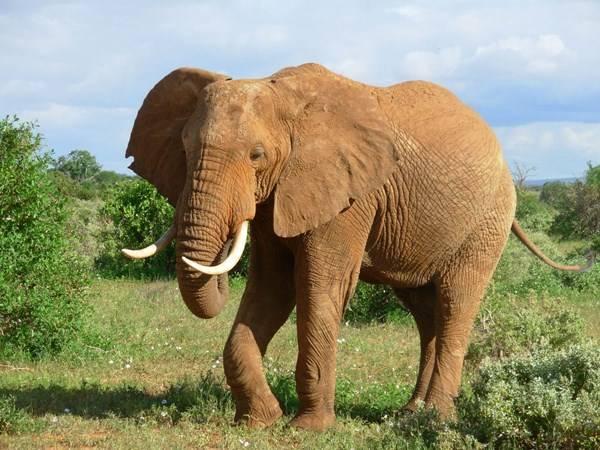 Nằm mơ thấy con voi đánh xổ số con gì dễ trúng