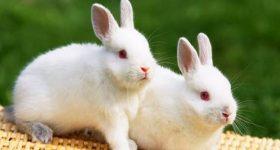 Nằm mơ thấy con thỏ là điềm báo tốt hay xấu? đánh con gì