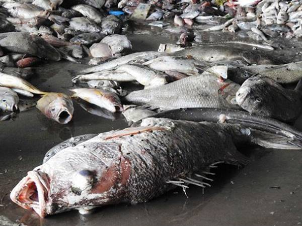 Mơ thấy cá chết là điềm gì? Đánh liền tay cặp số nào?